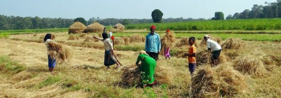 Agritech in India – Growing seeds of opportunities